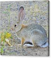 Grassland Youngster Canvas Print