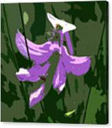 Grasspink Canvas Print