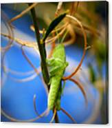 Grassy Hopper Canvas Print