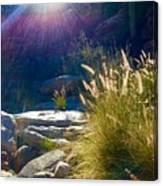 Grassy Sun Rays Canvas Print