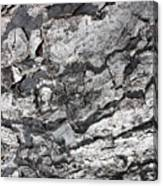 Gray Bark Canvas Print