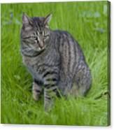 Gray Cat In Vivid Green Grass Canvas Print