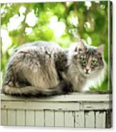Gray Cat Sitting On A Balcony Canvas Print