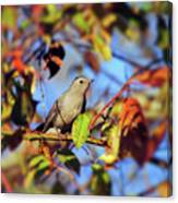 Gray Catbird Framed By Fall Canvas Print