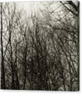 Gray Dawn Canvas Print