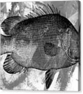 Gray Fish Canvas Print