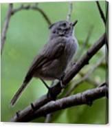 Gray Grey Bird 052814a Canvas Print