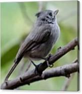 Gray Grey Bird 052814aa Canvas Print