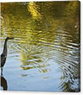 Gray Heron  Canvas Print