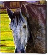 Gray Horse Canvas Print