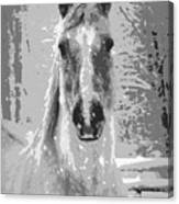 Gray Horse Canvas Print