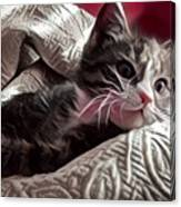 Gray Tabby With White Quilted Throw Canvas Print