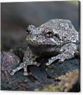 Gray Treefrog On A Log Canvas Print