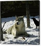 Gray Wolf 4 Canvas Print