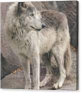 Gray Wolf Profile Canvas Print