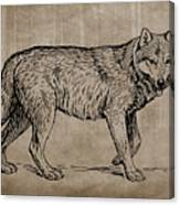 Gray Wolf Timber Wolf Western Wolf Woods Texture Canvas Print