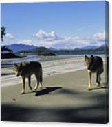 Gray Wolves On Beach Canvas Print