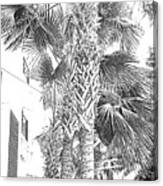 Grayscale Palm Trees Pen And Ink Canvas Print