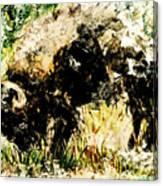 Grazing Bison Canvas Print