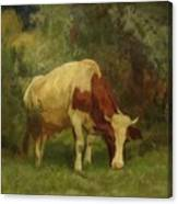 Grazing Cow Canvas Print