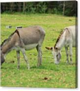Grazing Donkeys Canvas Print
