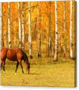 Grazing Horse In The Autumn Pasture Canvas Print