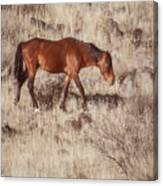 Grazing In The Winter Grass Canvas Print