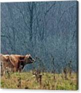 Grazing In Winter Canvas Print