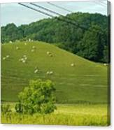 Grazing On The Mountain Side Canvas Print