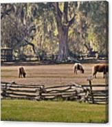 Grazing Ponies Canvas Print