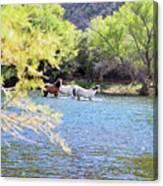 Grazing Salt River Horses Canvas Print