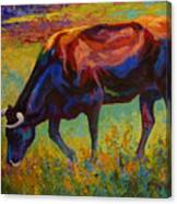 Grazing Texas Longhorn Canvas Print