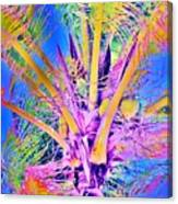 Great Abaco Palm Canvas Print