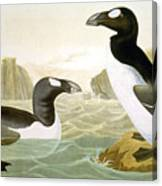 Great Auk (alka Impennis): Canvas Print