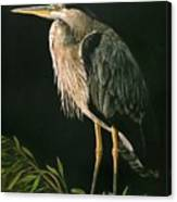 Great Blu Heron Canvas Print