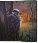 Great Blue At Sunset Canvas Print