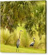Great Blue Golfing Canvas Print