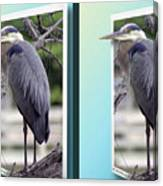 Great Blue Heron - Gently Cross Your Eyes And Focus On The Middle Image Canvas Print