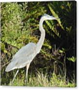 Great Blue Heron #2 Canvas Print