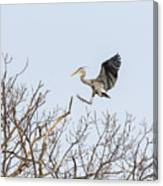 Great Blue Heron 2014-4 Canvas Print