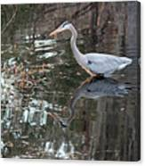 Great Blue Heron And Reflection IIi Canvas Print