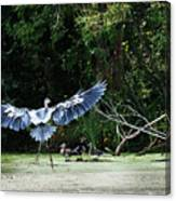 Great Blue Heron And Wood Ducks Canvas Print