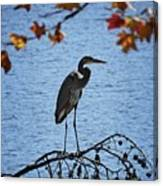 Great Blue Heron At Shores Of King's Mountain Point Canvas Print
