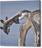 Great Blue Heron Catch Down The Hatch Canvas Print