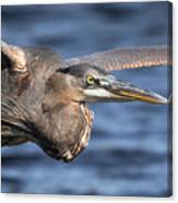 Great Blue Heron Close-up Canvas Print