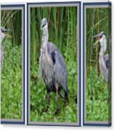 Great Blue Heron Collage Canvas Print