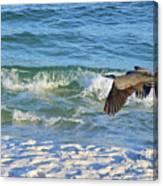 Great Blue Heron In Flight Canvas Print