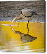 Great Blue Heron On Yellow Canvas Print