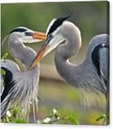 Great Blue Heron Pair 3 Canvas Print