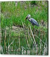 Great Blue Heron Series 5 Of 10 Canvas Print